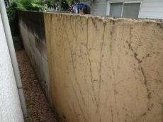 塀と一部の外壁に蔦が強く付いてました。