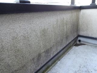 紫外線の弱い日の当たらない面の外壁は塗膜の経年劣化により藻が多く発生してました。